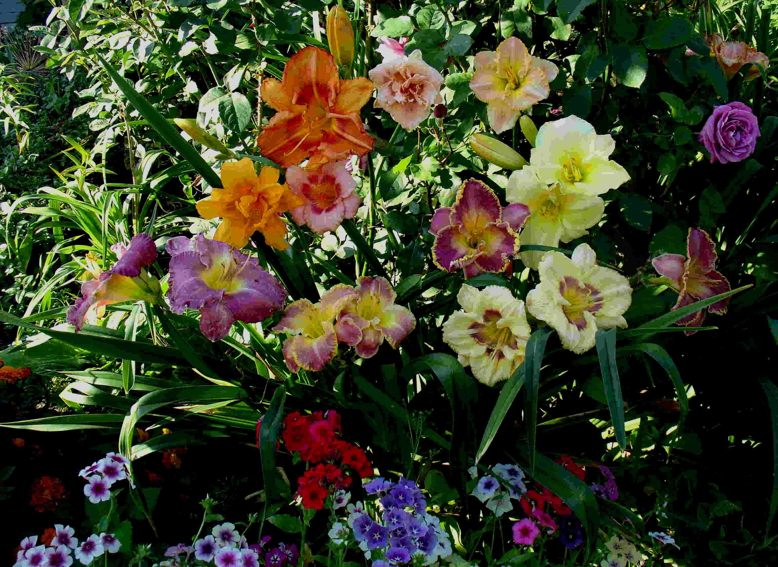 Посадка и пересадка лилий осенью - Садовые цветы 38