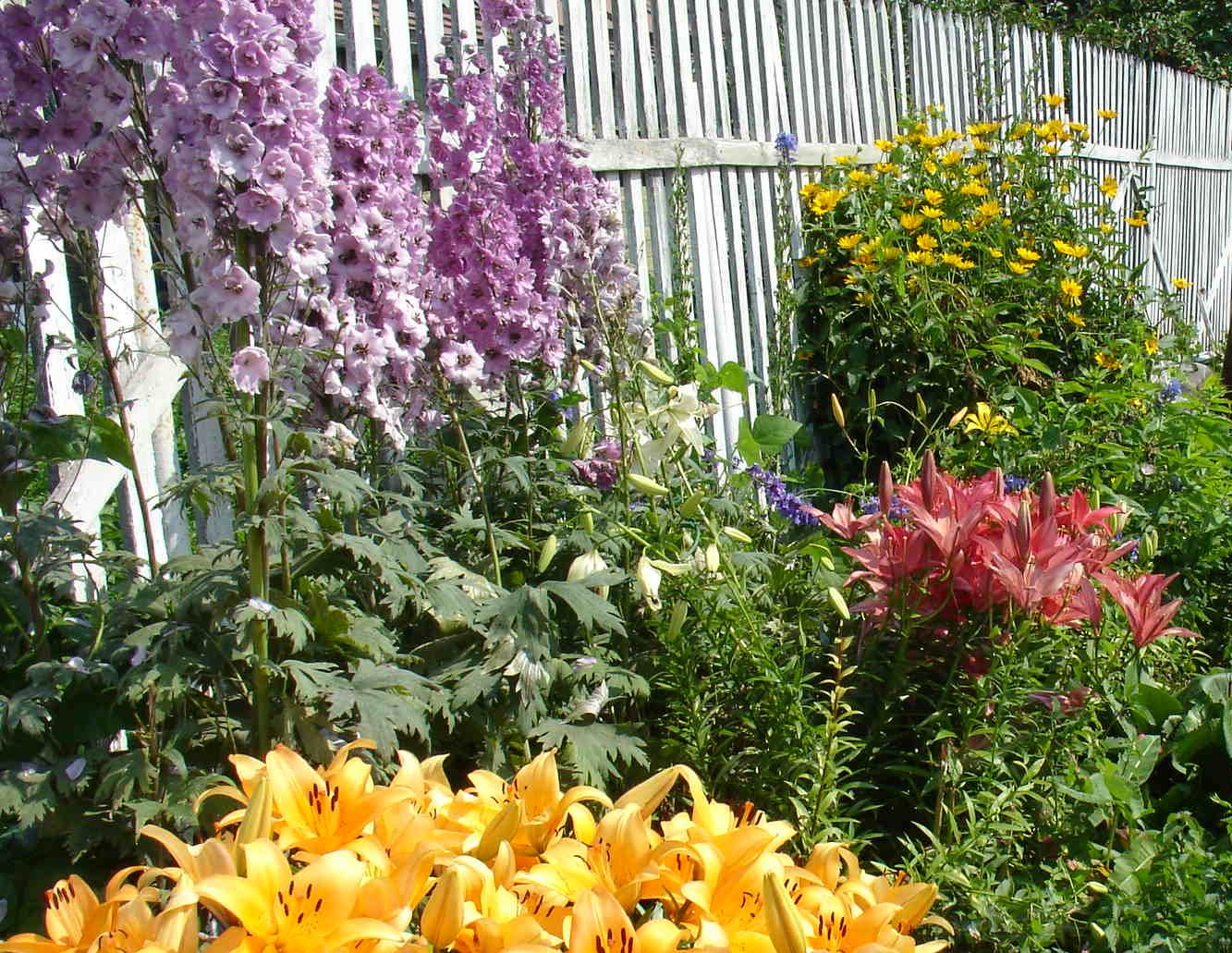 Дельфиниумы в дизайне сада с какими цветами сочетается фото
