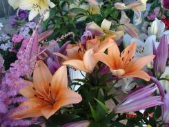 Июльская выставка цветов 2005 год!