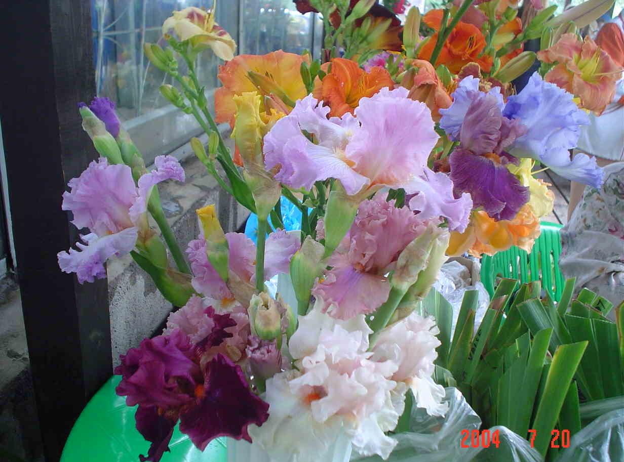 Выставка цветов картинки 8